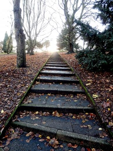 caminho_escadas_vegetacao_passagem_trilha