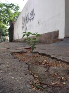 planta-nascendo-calcada