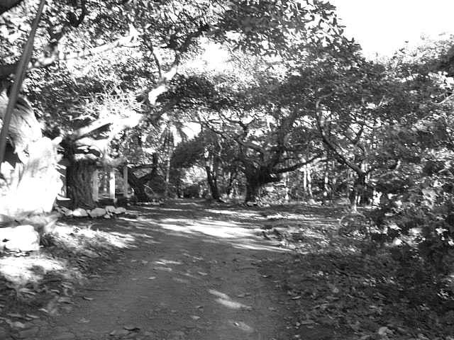 trilha-mata-preto-branco