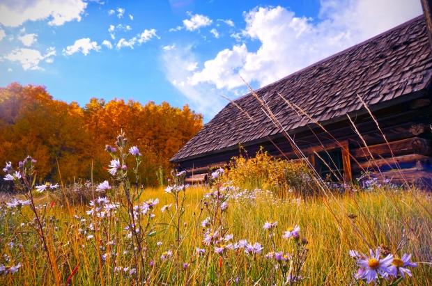 casa-chale-madeira-campo-flores-sol-paisagem