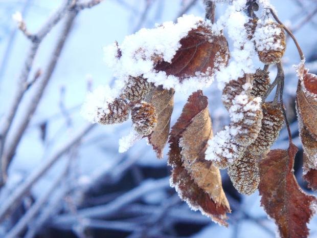 folhas_inverno_neve